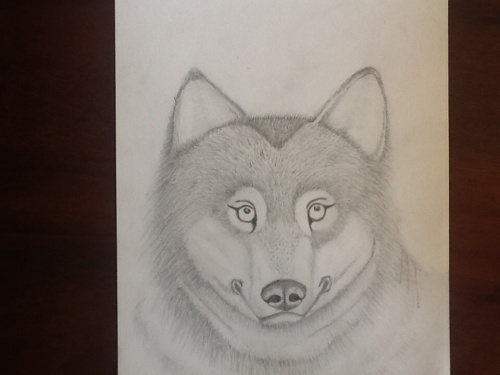 Sketch of wolf